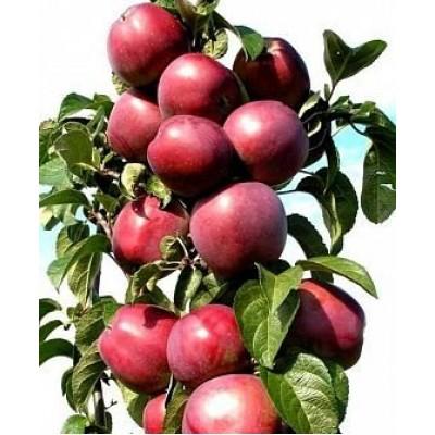 """Саженец яблони колоновидной """"Патриот"""""""